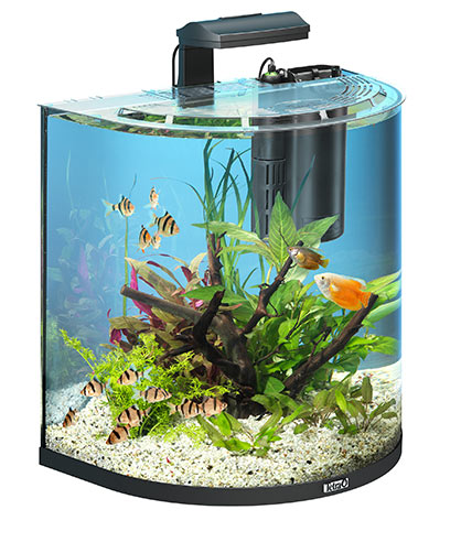 Tetra aquaart explorer 60 litre tropical aquarium aqua for Tetra fish tanks